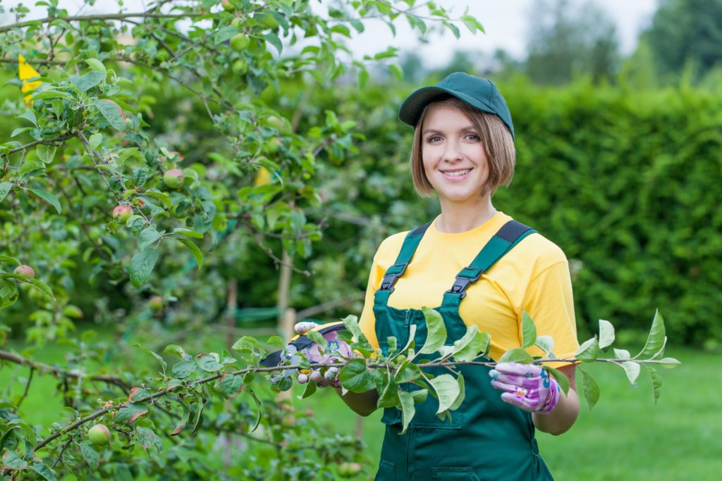 Trim and prune your trees this spring