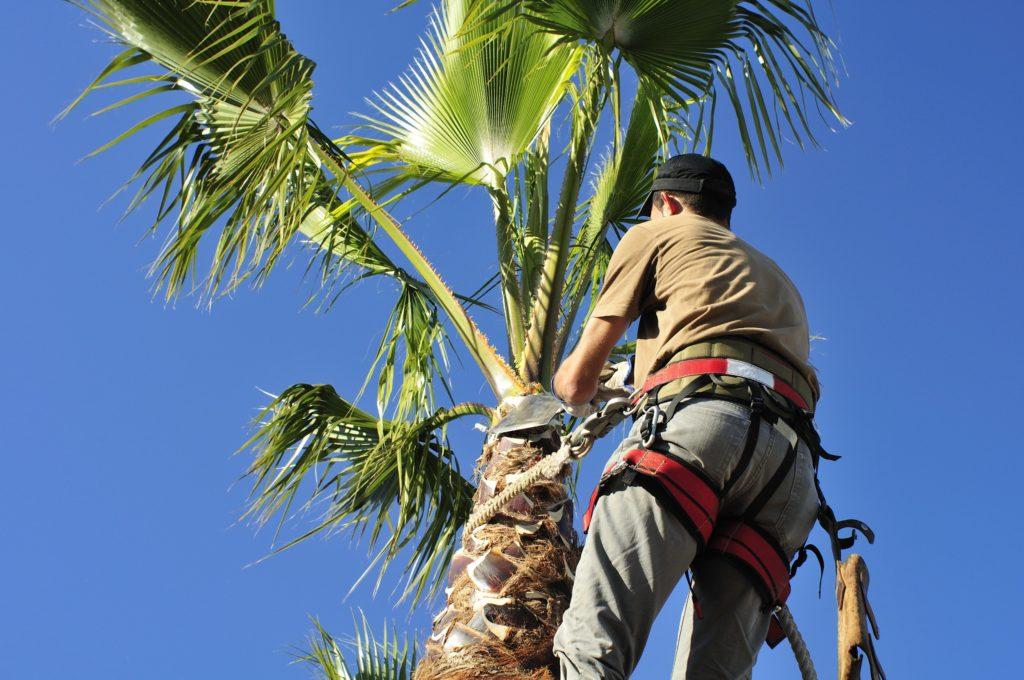Can a Tree Service increase the value of your home?