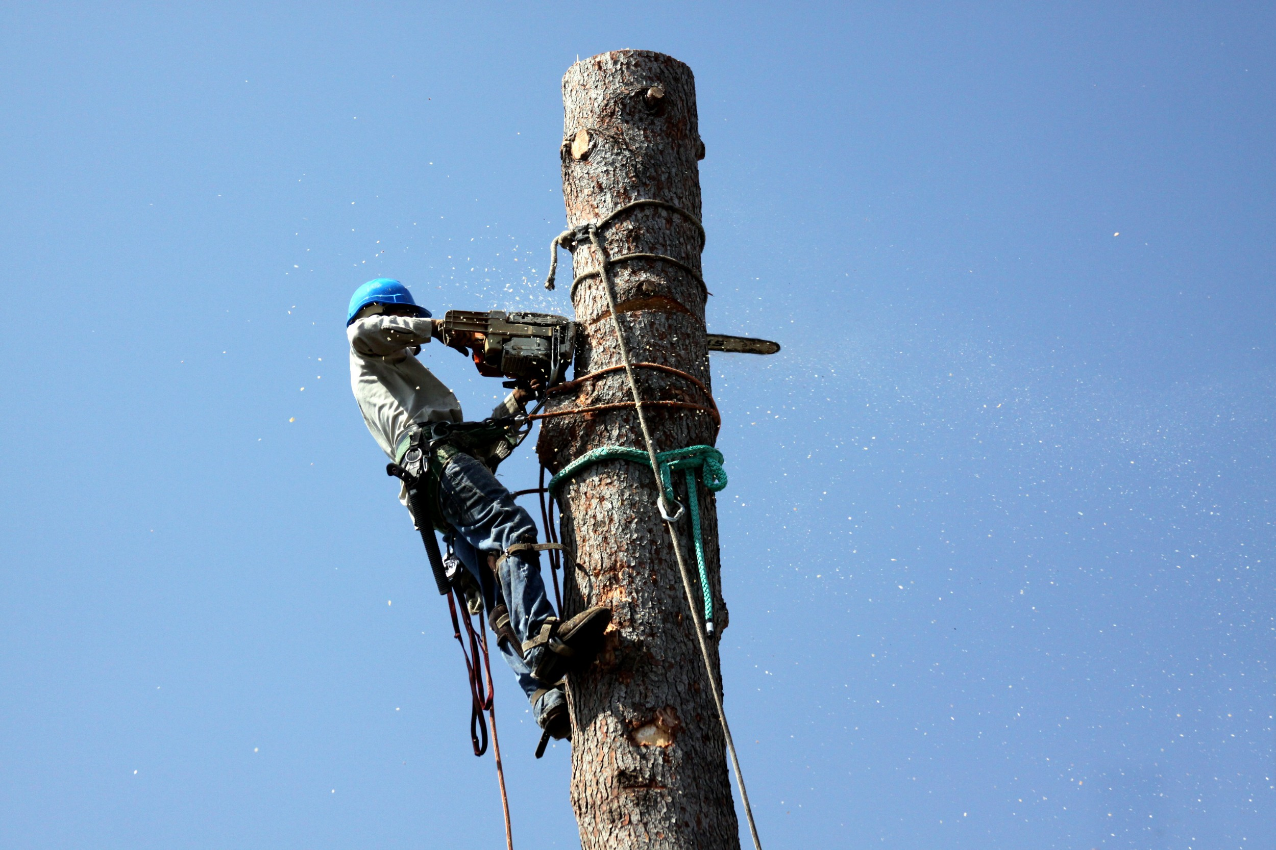 An OrlandoTreeService Company Can Help with Tree Removal and Land Clearing
