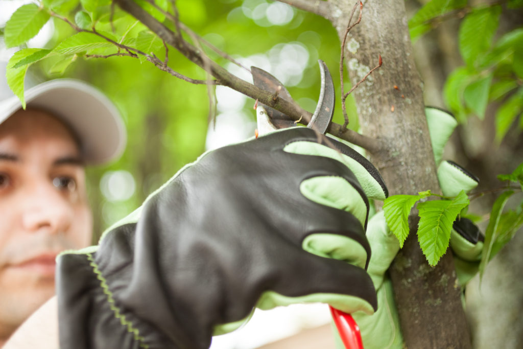 Helpful tips for spring tree care