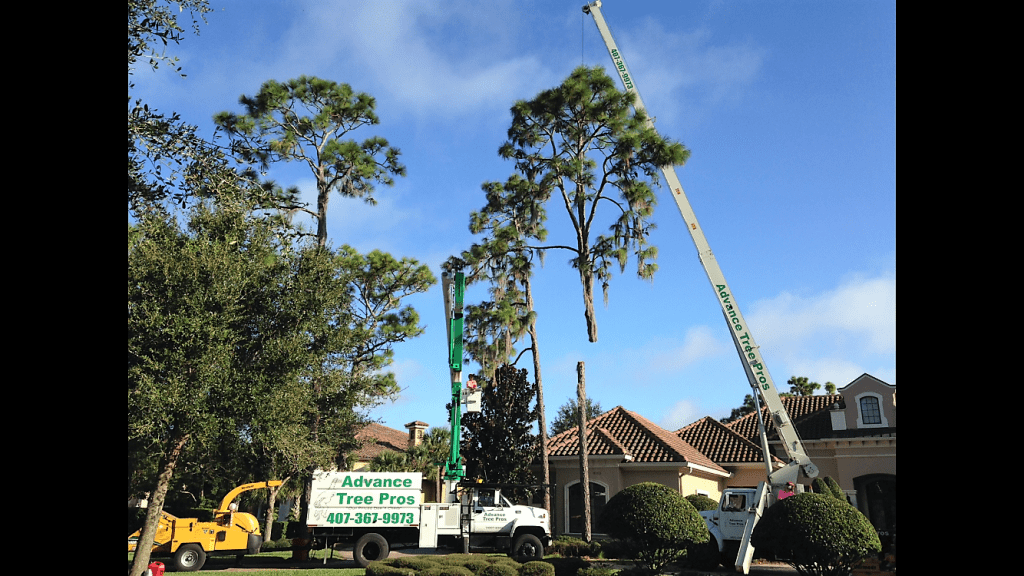Tree Removal Service Orlando