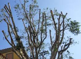 tree trimming service inWinter Park