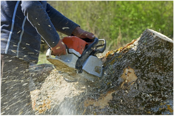 HIRE OUR TREE REMOVAL SERVICE TO CLEAR OUT YOUR APARTMENT PROPERTY