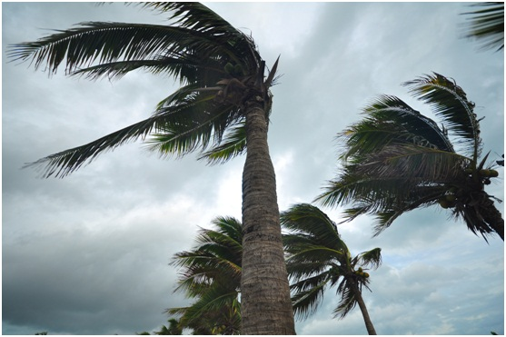 Call our Tree Removal Company for your After-Storm Cleanup