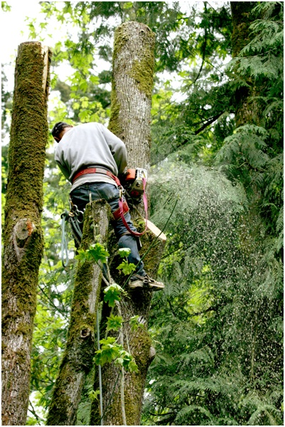 tree removal company in Orlando