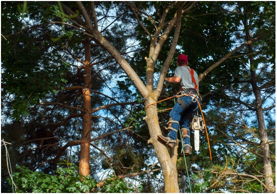 ORLANDO TREE REMOVAL DECREASES THE POTENTIAL SPREAD OF DISEASE & INSECT INFESTATION