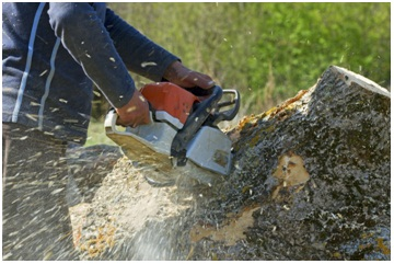 Who Should You Hire for Tree Removal and Other Tree Services