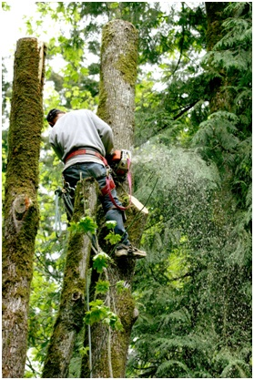 Why Tree Services is a Good Idea for your home