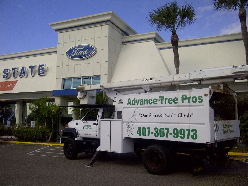 Advance Tree Pros is Your Year-Round Tree Service Specialist