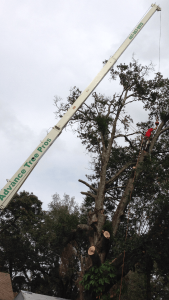 Orlando. Hiring Tree Cutting Services