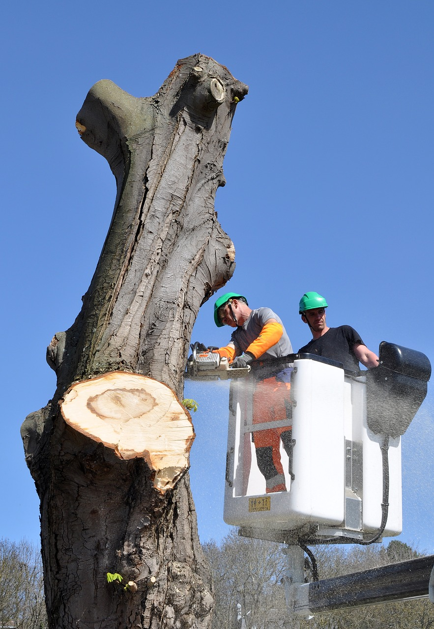 AS A LANDSCAPER, A TREE REMOVAL SERVICE IS INVALUABLE TO YOU