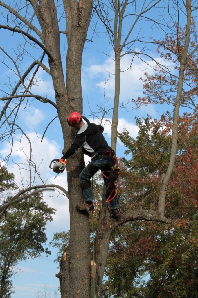 We Perform Tree Removal in Orlando