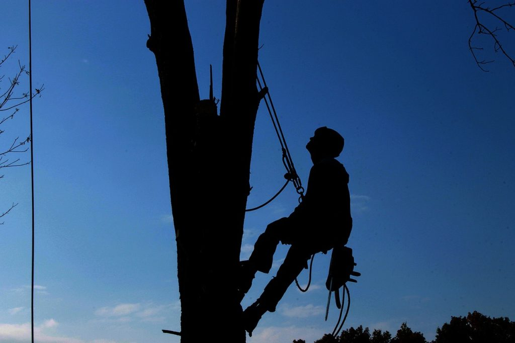 Essential Steps to Hiring the Best Tree Company