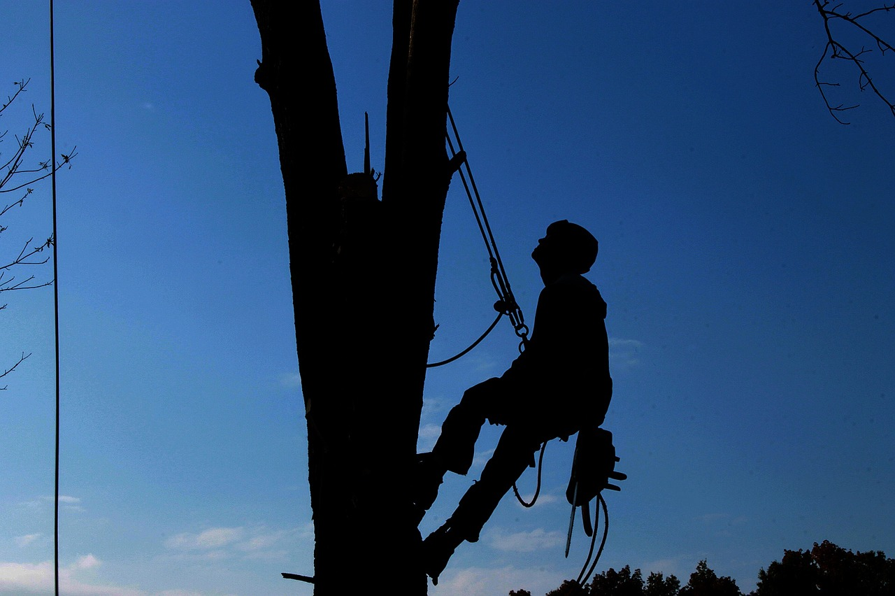 DON'T RISK IT – GET PROFESSIONAL TREE PRUNING SERVICES