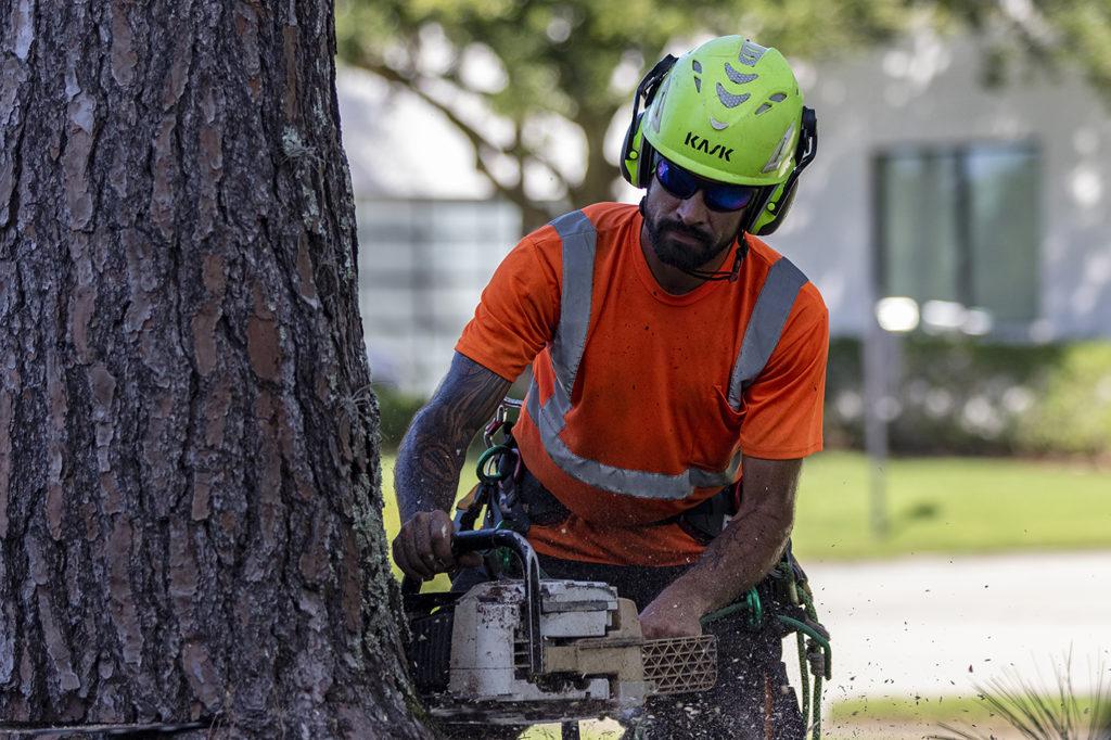 Longwood Tree Removal