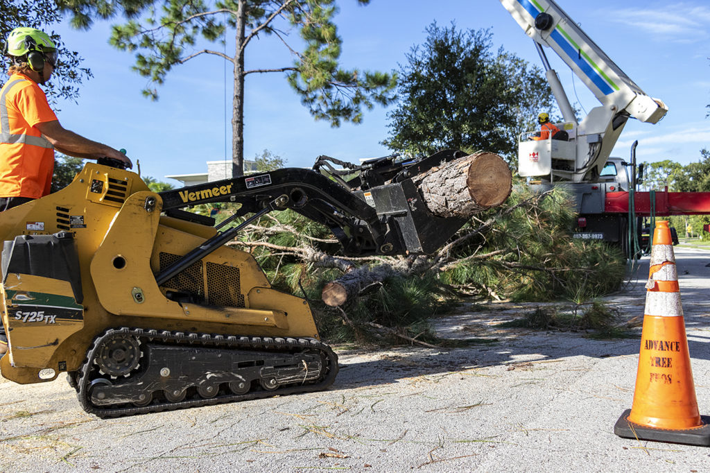 Best Tree Removal Service