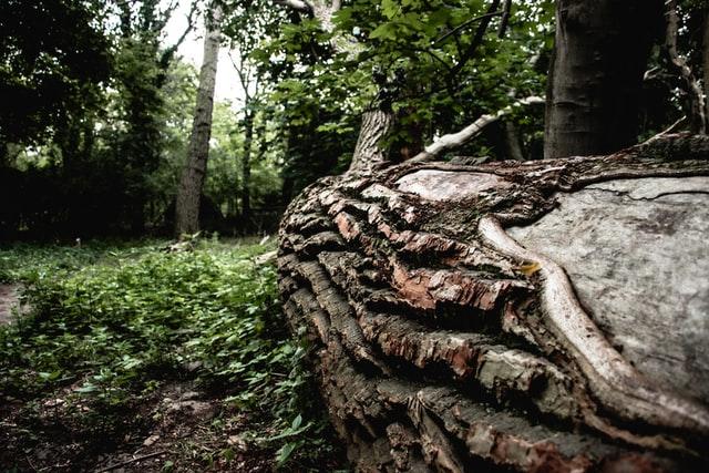 dead tree on ground