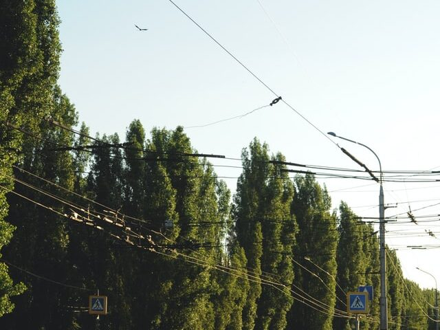 trees near wires