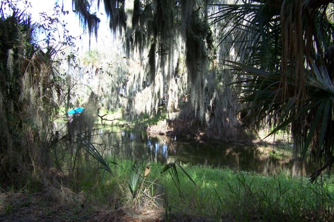 Natural Shade From Orlando Trees