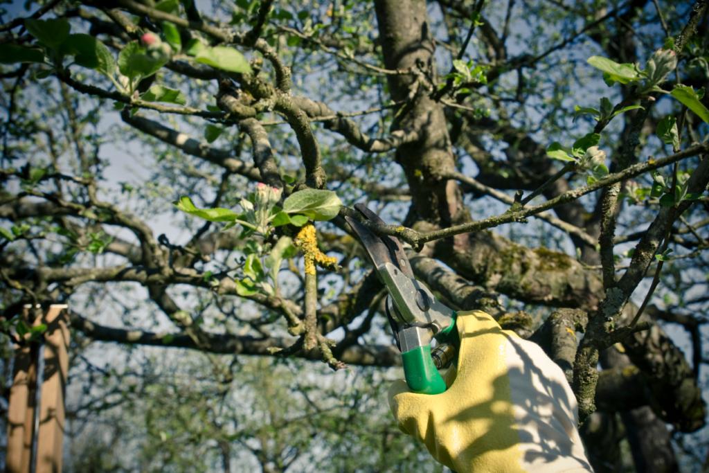 Pruning Tree in Spring