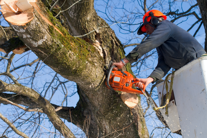 Pruning Trees During Spring in Central Florida