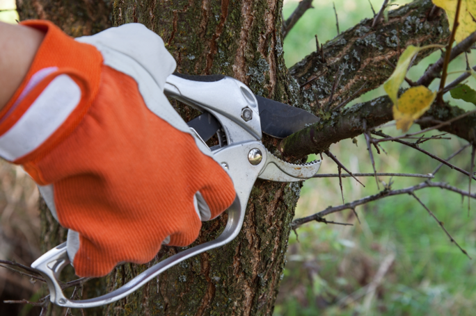 When is Springtime Pruning Necessary